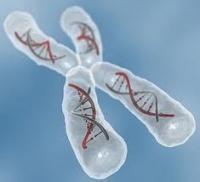ژنتیکی هااااا