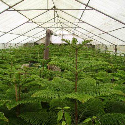 تکثیر گیاهان زینتی