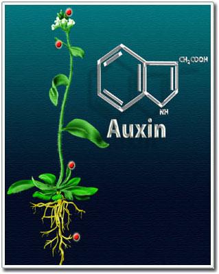 مواد تنظیم کننده رشد گیاهی