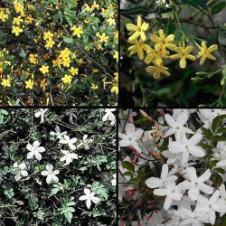 گیاه شناسی کاربردی و طراحی کاشت