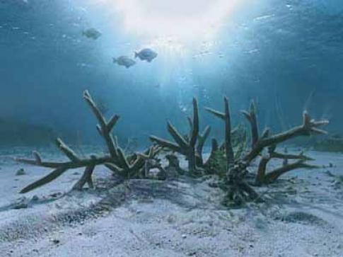 مرجان های دریایی