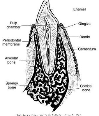 مواد دندان سازی