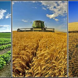 نقش اقلیم بر عملکرد محصولات زراعی