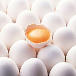 کیفیت تخم مرغ