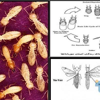 الهام از لانه مورچه در معماری