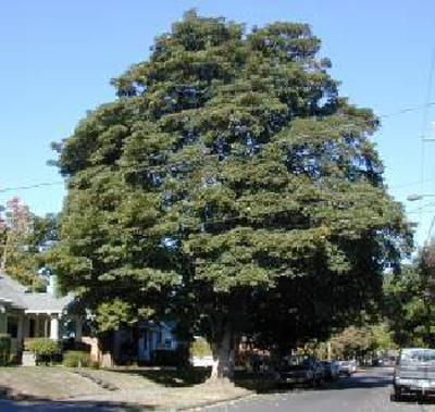 درخت شناسی 1