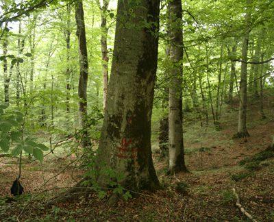 طرح جنگلداری بخش گرازبن