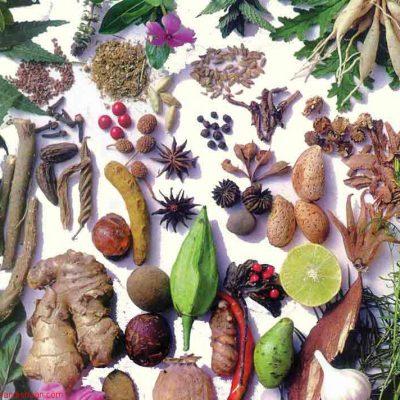 اطلس کامل گیاهان دارویی و معطر