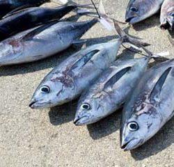 تن ماهیان