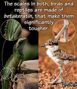 ویژگی های مشترک پرندگان و خزندگان