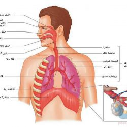 جزوه دستگاه تنفسی