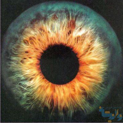 جزوه دستگاه بینایی