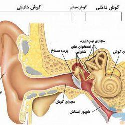 جزوه دستگاه شنوایی