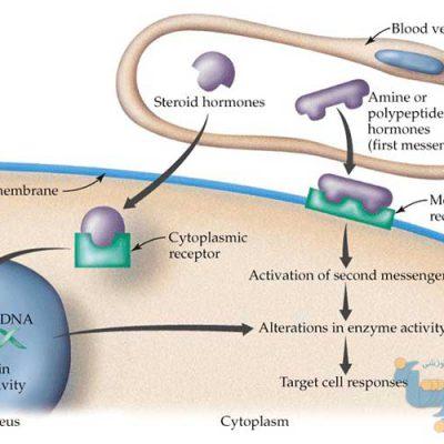 جزوه بیوشیمی هورمون