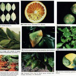 بیماری های فیزیولوژیک گیاهان