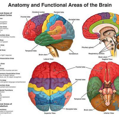 جزوه فیزیولوژی پیشرفته دستگاه اعصاب مرکزی