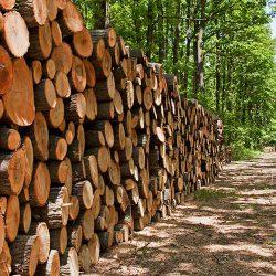 جزوه چوب شناسی و حفاظت چوب