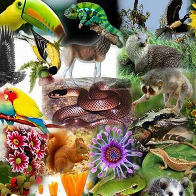 کتاب تنوع زیستی
