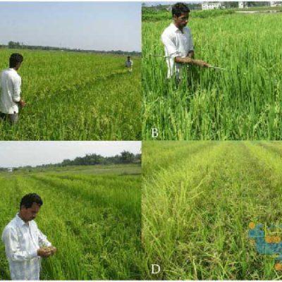 جزوه زراعت تکمیلی دانشگاه پیام نور