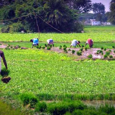 جزوه زراعت عمومی