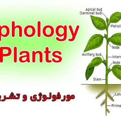 جزوه مورفولوژی و تشریح گیاهی