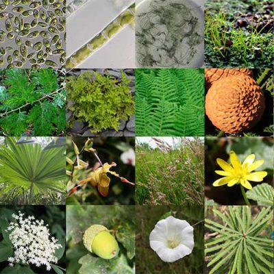 جزوه سیستماتیک گیاهی 1