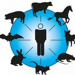 بیماریهای مشترک انسان و حیوان