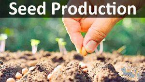 اصول تولید بذر